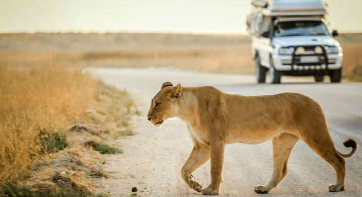 Wildlife spotting on your first African Safari