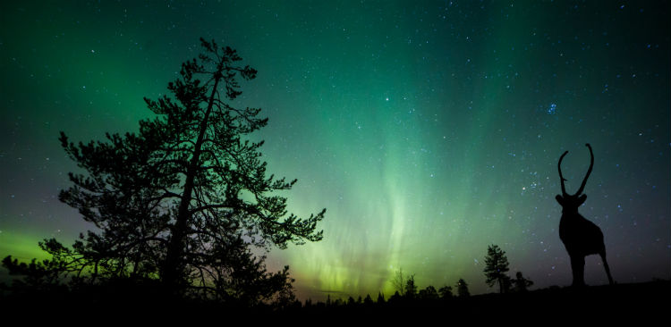 See the Northern lights and watch this beautiful green and red aurora dancing