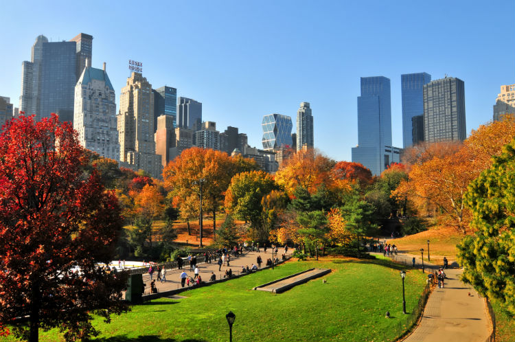 Central Park & NYC