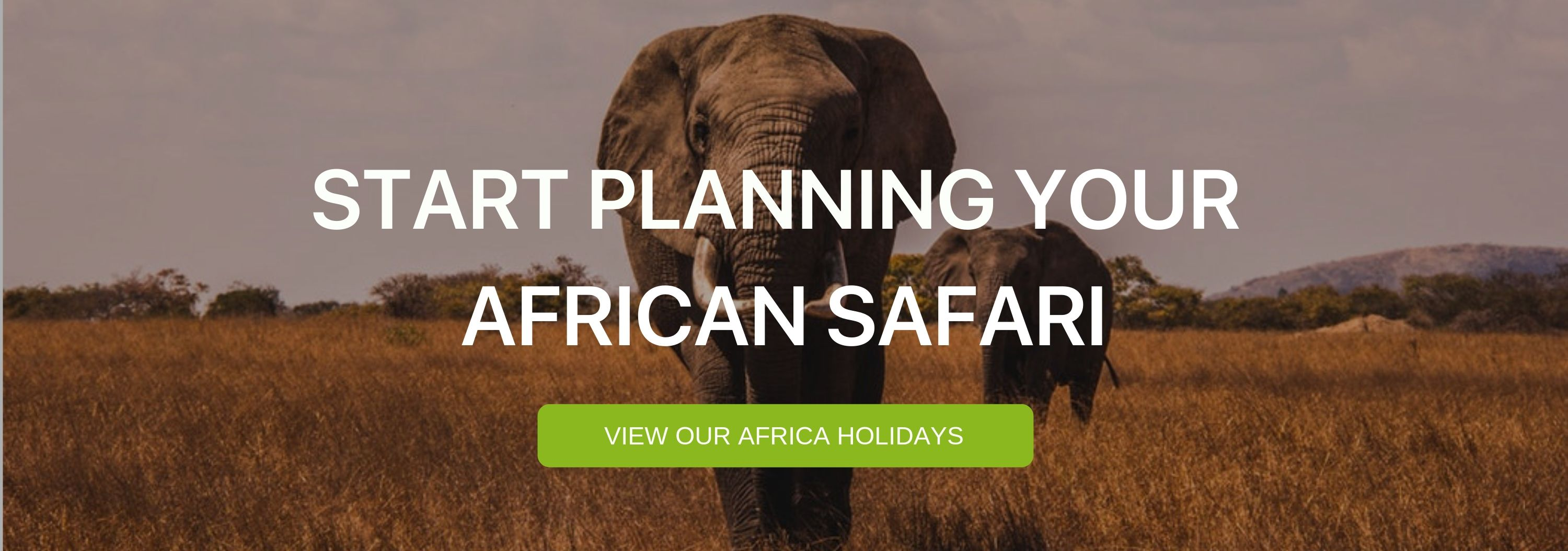 """A banner that says """"Start Planning your African Safari"""""""
