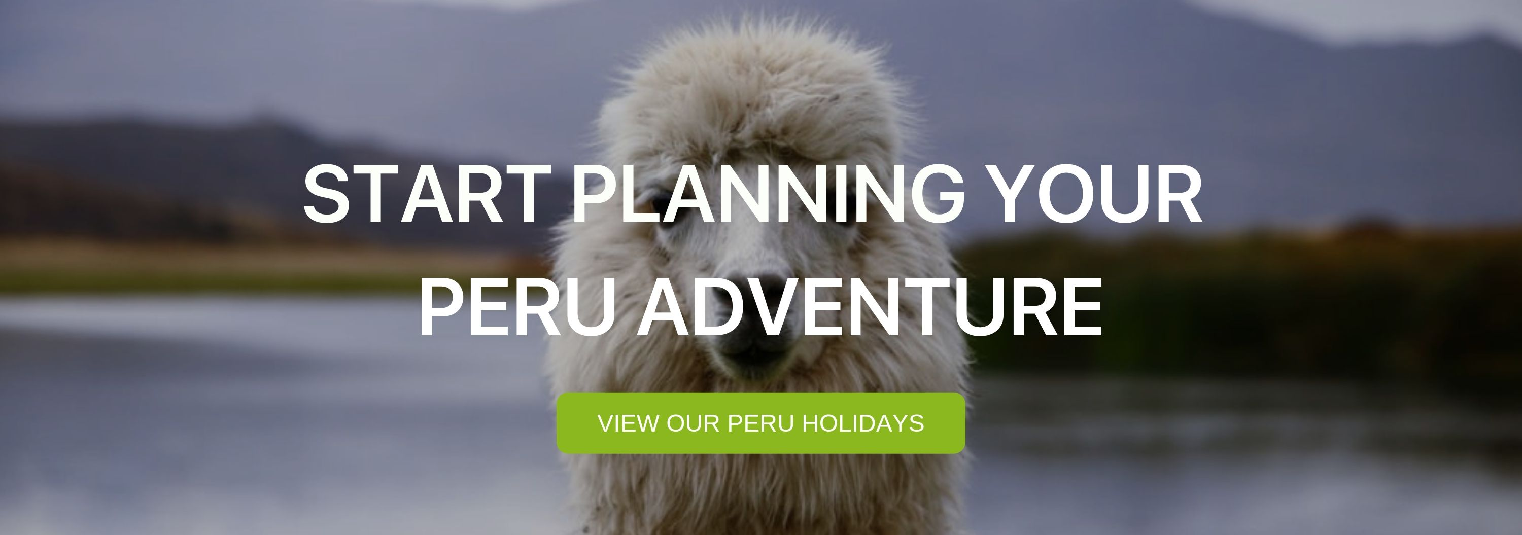 """A banner that reads """"Start Planning your Peru Adventure"""" with a llama in the background."""