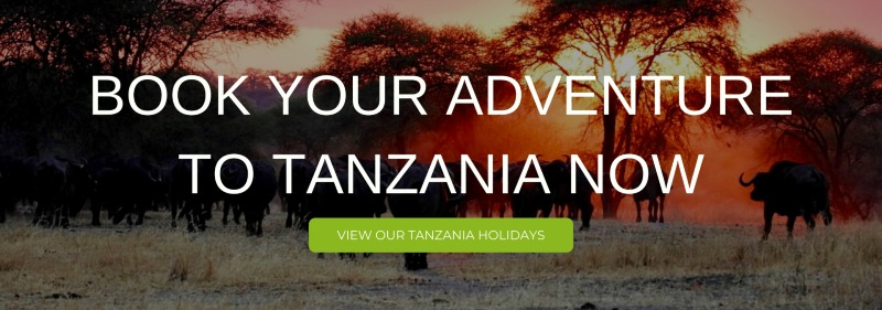 "A banner that says ""Book your Adventure to Tanzania now"""